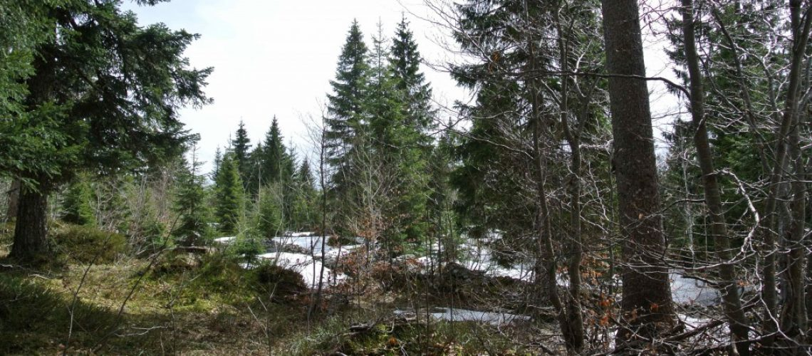 foret-30-avril-2012-1024x685